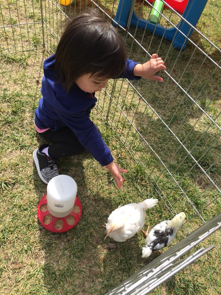 We have hens we raise and collect eggs